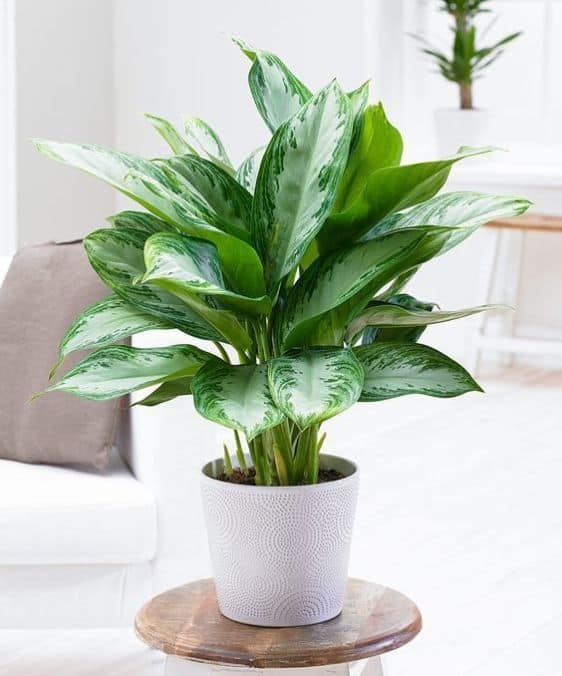 15 Best plants for apartments 58