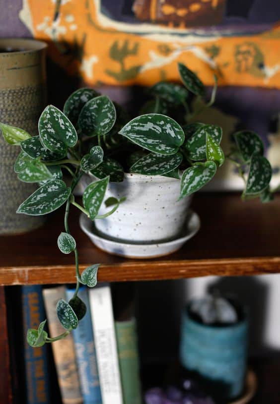 15 Best plants for apartments 56